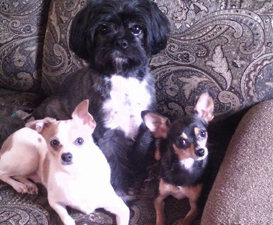 dogs photo3 - Sammie, Pookie and Cosmo
