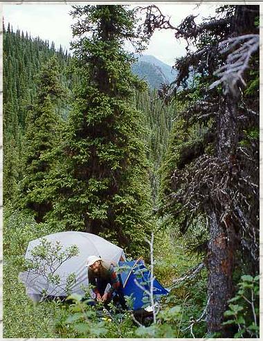 Tanana Valley Campground - Fairbanks, AK - RV Parks