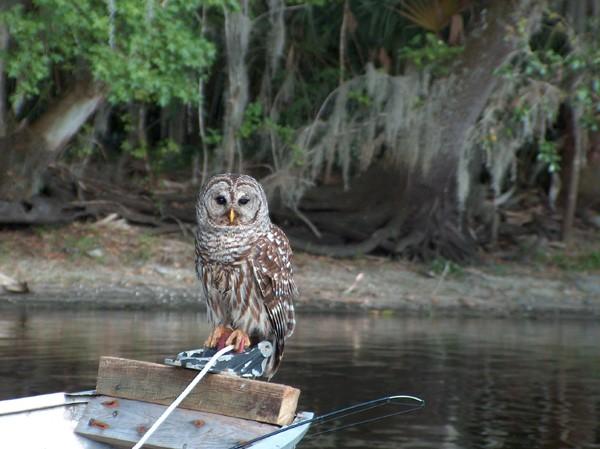 Blue Springs State Park - Orange City, FL - Florida State Parks
