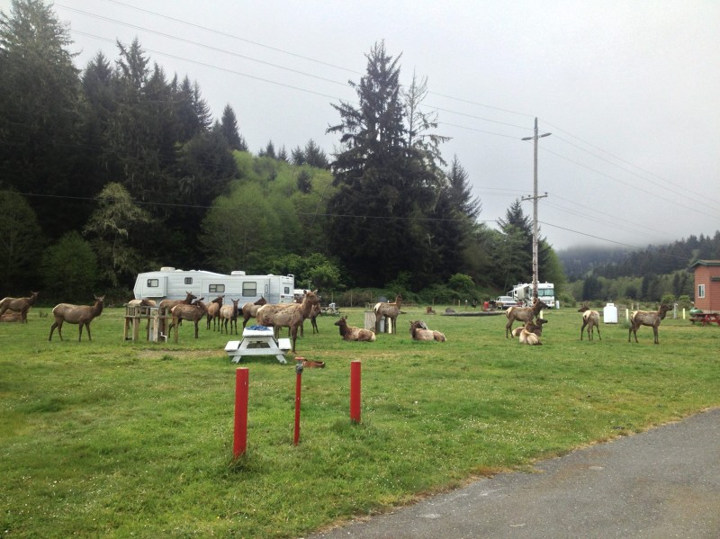 Elk Country RV Resort & Campground - Trinidad, CA - RV Parks