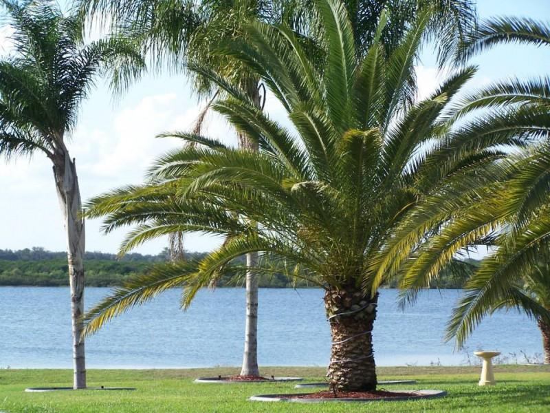Adelaide Shores RV Resort - Avon Park, FL - RV Parks