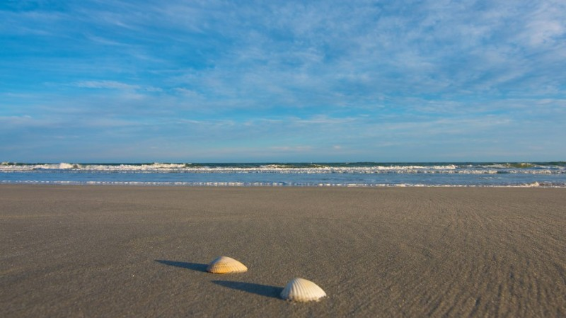 Huntington Beach State Park - Murrells Inlet, SC - South Carolina State Parks