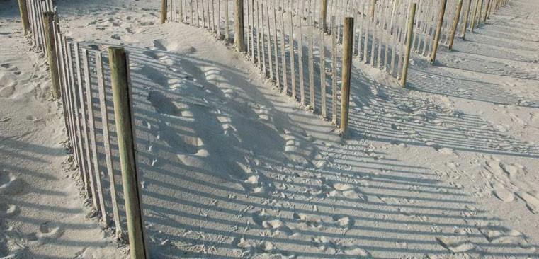 Winners Rv Park - Carolina Beach, NC - RV Parks