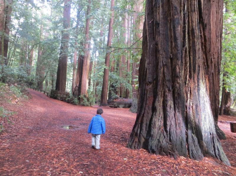 Memorial County Park - Loma Mar, CA - County / City Parks