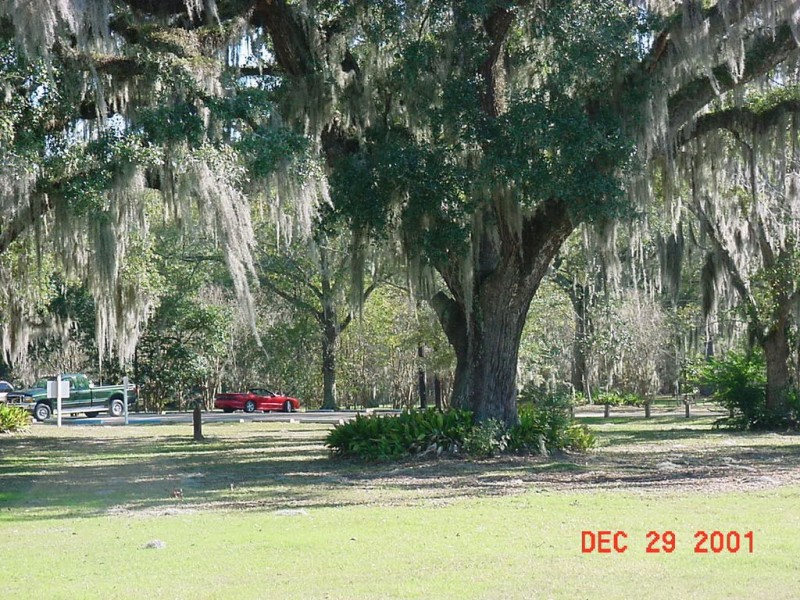 Fairview Riverside State Park - Madisonville, LA - Louisiana State Parks