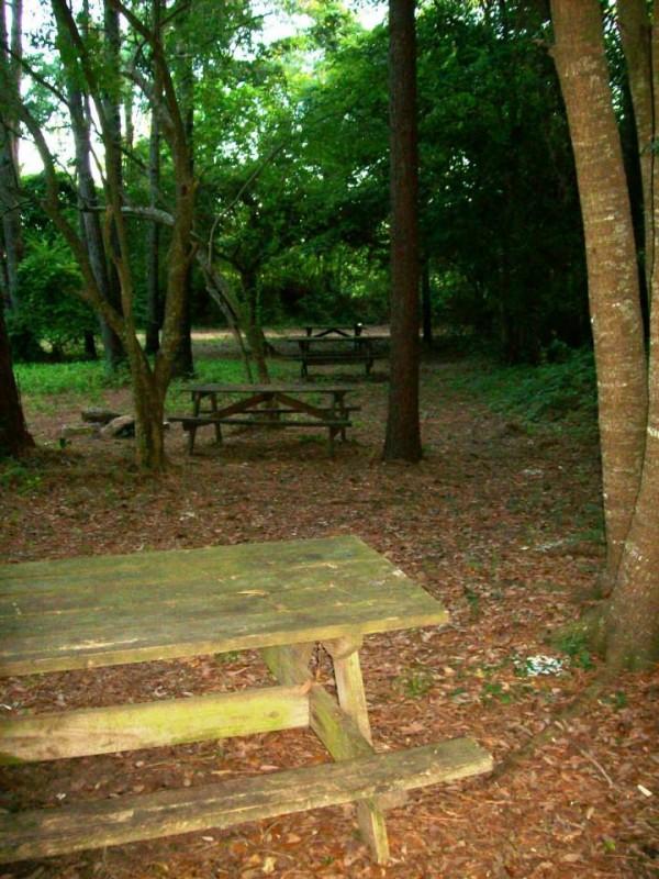 Carolina Beach Campground - Wilmington, NC - RV Parks