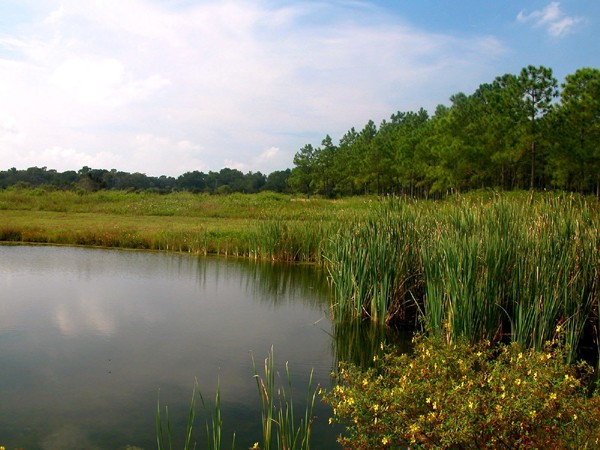 Alafia River State Park - Lithia, FL - Florida State Parks