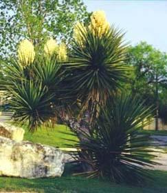 Tejas Valley Rv Park & Campground - San Antonio, TX - RV Parks