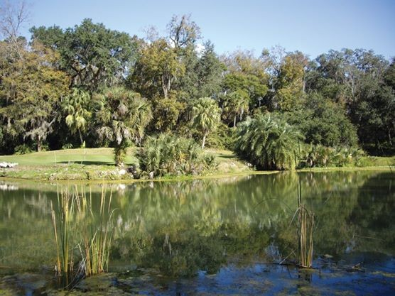 Shady Brook Golf & Rv Resort - Sumterville, FL - RV Parks