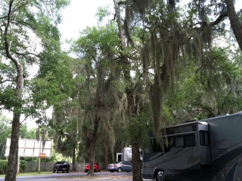 Savannah Oaks RV Resort - Savannah, GA - RV Parks