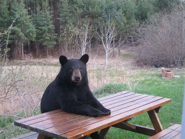 Black Bear Campground - Salisbury, MA - RV Parks