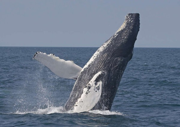 Sea Goddess Whale Watching - Moss Landing, CA - Attractions