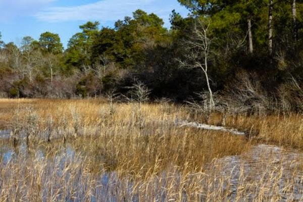 Lake Waccamaw State Park - Lake Waccamaw, NC - North Carolina State Parks