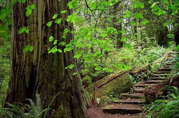 Jedediah Smith Redwoods State Park - Crescent City, CA - California State Parks