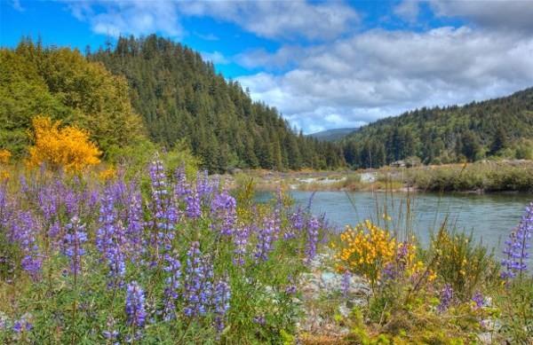 Klamath River RV Park - Klamath, CA - RV Parks