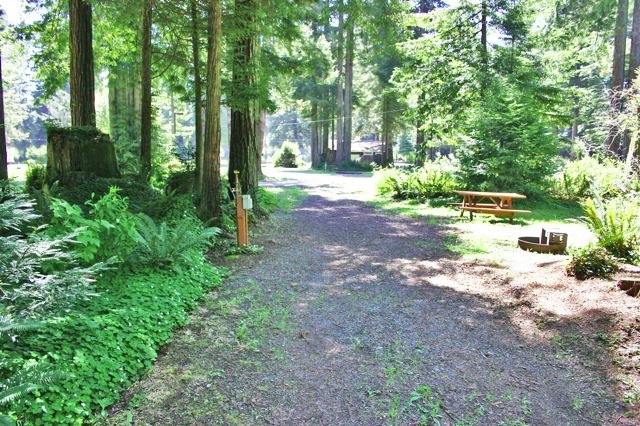 redwoods-rv-resort-009