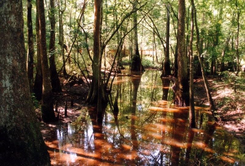Tickfaw State Park - Springfield, LA - Louisiana State Parks