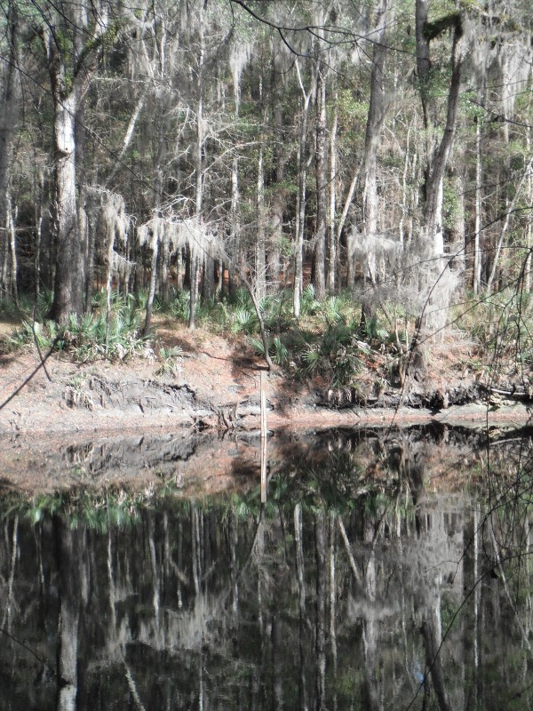 River Rise Preserve State Park - High Springs, FL - Florida State Parks