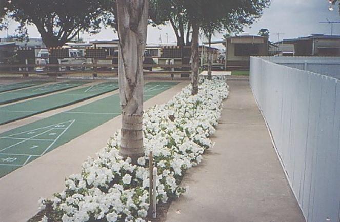 Sunlight Travel Trailer Park - Mcallen, TX - RV Parks