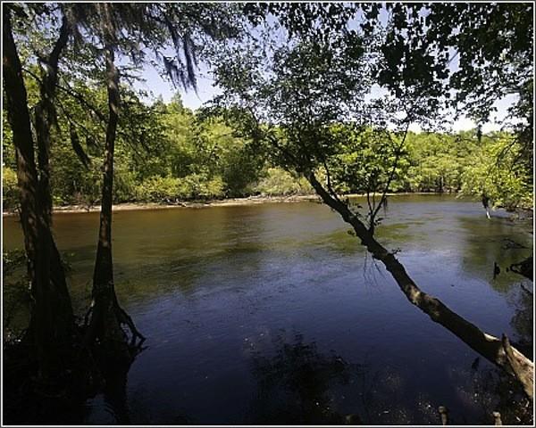 Colleton State Park - Walterboro, SC - South Carolina State Parks