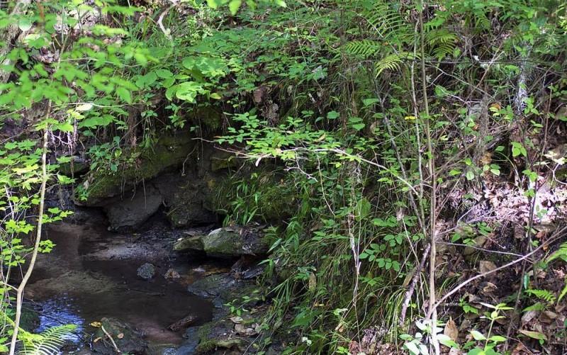 Devil's Millhopper Geological State Park - Gainesville, FL - Florida State Parks