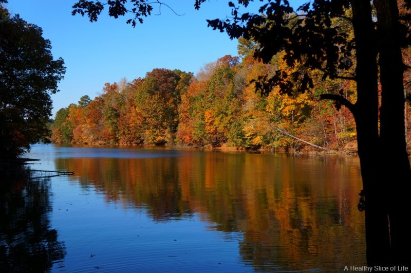 Lake Norman State Park - Troutman, NC - North Carolina State Parks