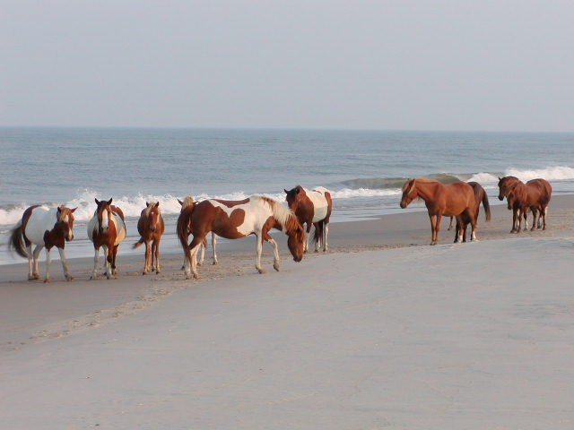 Assateague State Park - Berlin, MD - Maryland State Parks