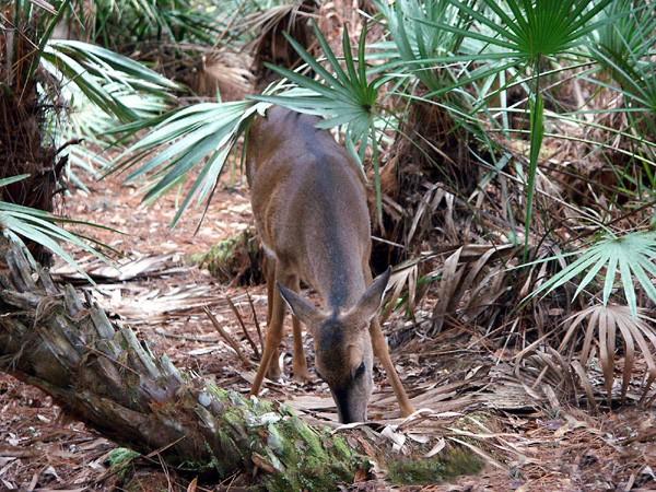 Lake Kissimmee State Park - Lake Wales, FL - Florida State Parks