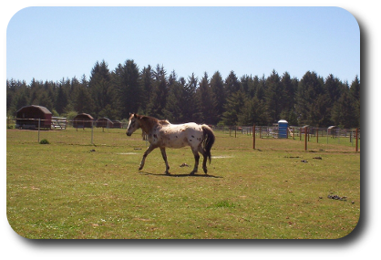 Orman Ranch Guest Ranch and Stables  - Crescent City, CA - RV Parks