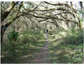 Wild Frontier RV Park - Ocala, FL - RV Parks