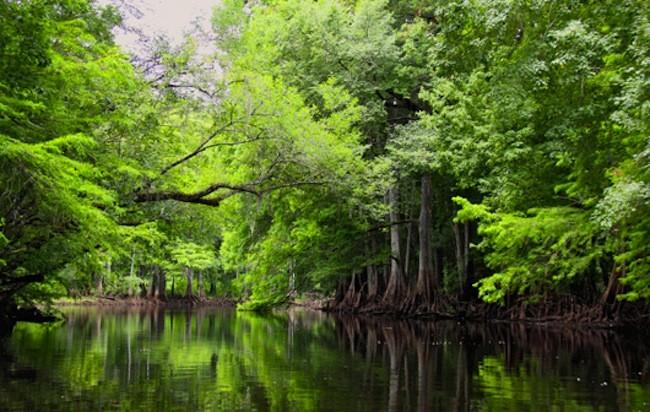 Lake Talquin State Park - Tallahassee, FL - Florida State Parks