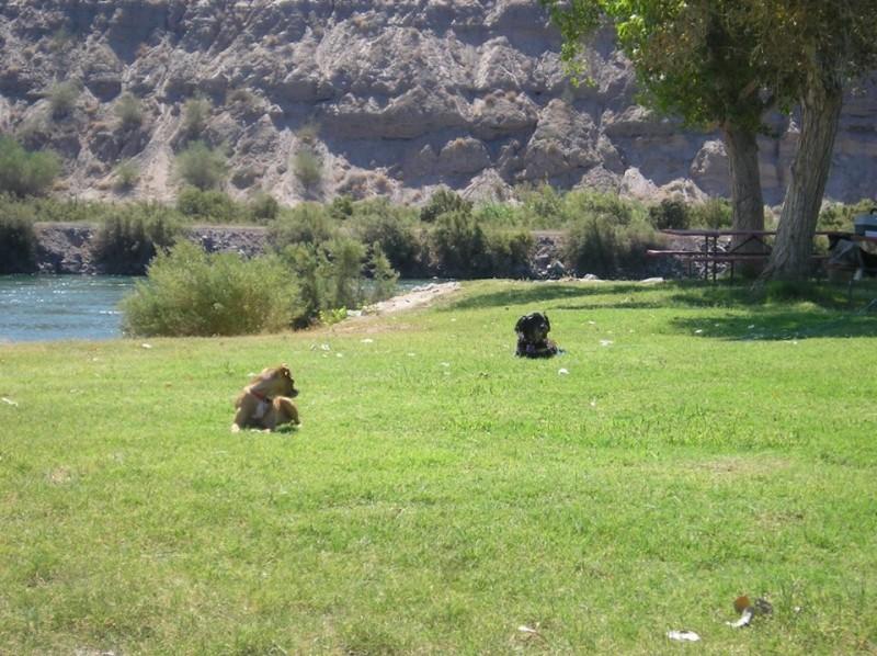 Destiny McIntyre RV Resort - Blythe, CA - RV Parks