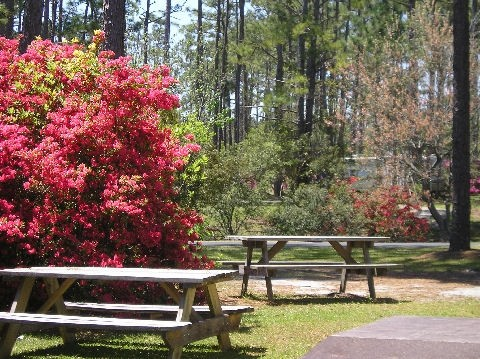 Whispering Pines Campground Newport Nc Encore Resorts