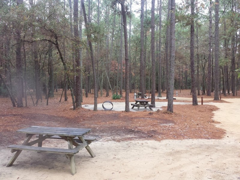 Little Pee Dee State Park - Dillon, SC - South Carolina State Parks