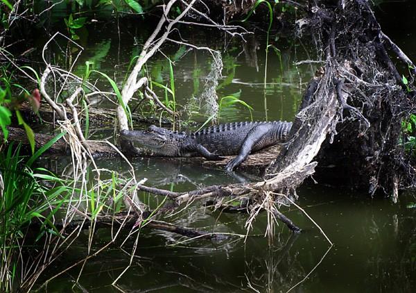 Paynes Prairie Preserve State Park - Micanopy, FL - Florida State Parks