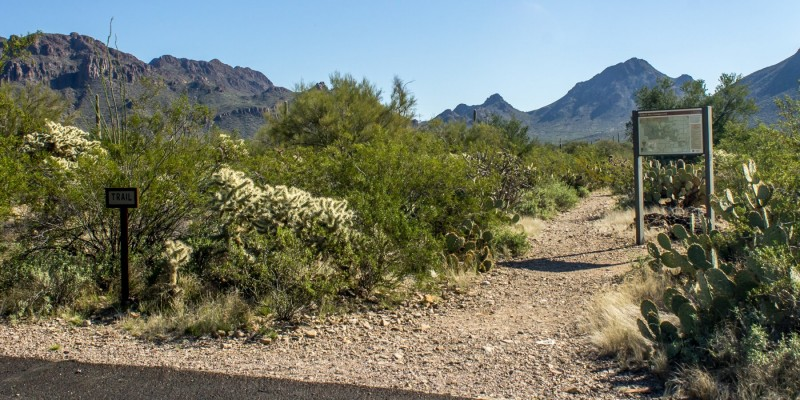 Gilbert Ray Campground Tucson Az County City Parks