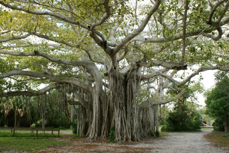 Hugh Taylor Birch State Park - Fort Lauderdale, FL - Florida State Parks