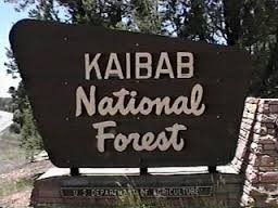 Kaibab National Forest - Williams, AZ - National Parks