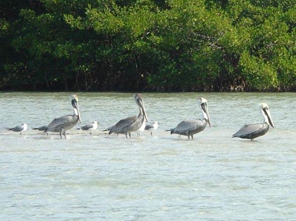 Stump Pass Beach State Park - Englewood, FL - Florida ...