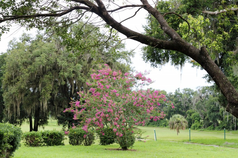 Town & Country RV Resort - Dade City, FL - RV Parks