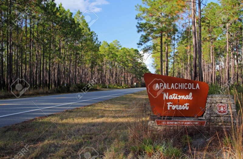 Apalachicola National Forest   Bristol, FL   National Parks