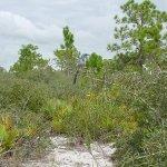 Lake June-in-Winter Scrub State Park - Lake Placid, FL - Florida State Parks