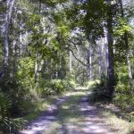 River Rise Preserve State Park - High Springs, FL - Florida State Parks