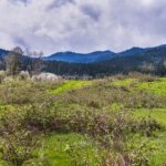 Laird Lake Campground - Port Orford, OR - Free Camping