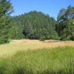 Austin Creek State Recreation Area - Guerneville, CA - RV Parks