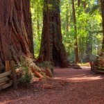 Henry Cowell Redwoods State Park - Felton, CA - California State Parks