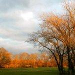 Bluegrass Music RV Park - Franklin, KY - RV Parks