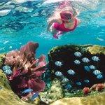 John Pennekamp Coral Reef State Park - Key Largo, FL - Florida State Parks