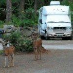 Alpine View RV Park & Campground - Leavenworth, WA - RV Parks