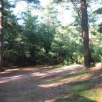 Forge Pond Campground - Assonet, MA - RV Parks